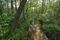 Rzeka Iłga